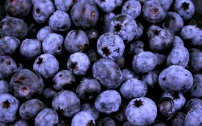 Blueberries – A super fruit
